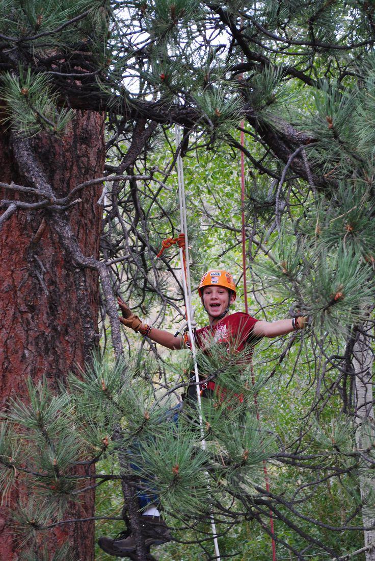 11 Best Tree Work Images On Pinterest Adult Tree House