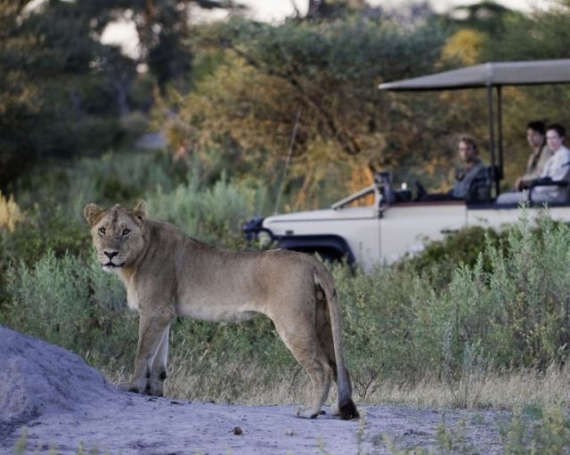 Get closer to nature with a safari at Little Mombo Camp  http://www.africanwelcome.com/botswana/botswana-private-game-lodges/little-mombo-botswana