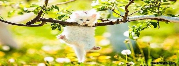 Kitty Hanging on.... Facebook Cover