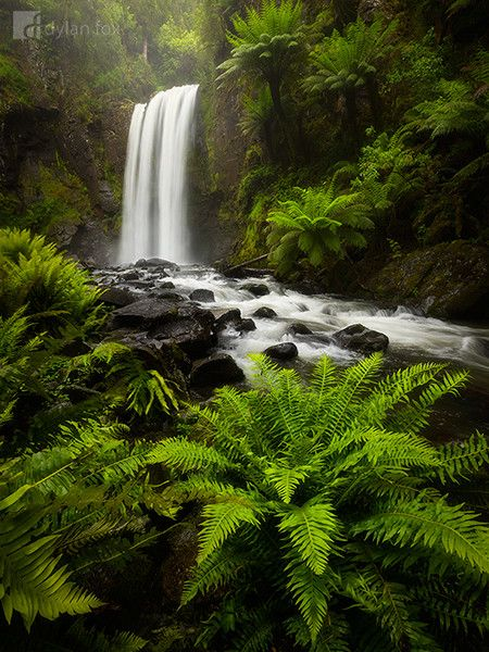 The forests along the Great Ocean Road in Victoria are filled with stunning waterfalls. This Hopetoun Falls photograph was captured in ideal conditions. It was raining with just enough short breaks to get my camera gear out and capture a shot. The rain really brings the colours to life even if it is difficult to shoot in. I was truly blown away by the beautiful forests in this part of Australia and cannot wait to return there again one day! Immerse Yourself by Dylan Fox on 500px