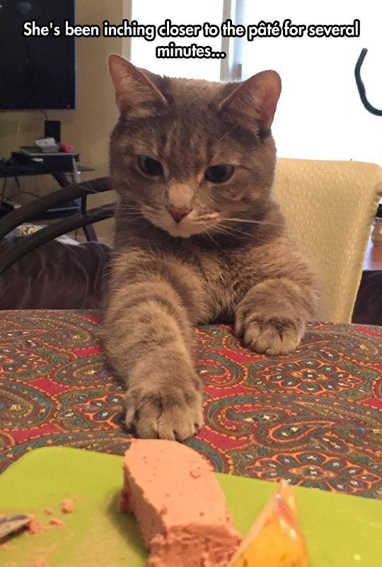 walmart flea medicine for cats