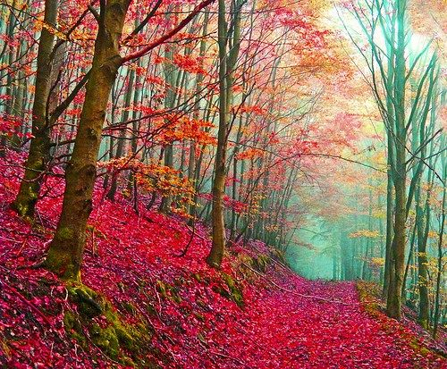 Red Forest Path, ItalyNature, Enchanted Forests, Lost Soul, Autumn, Colors, Beautiful, So Pretty, Places, Fairies Tales