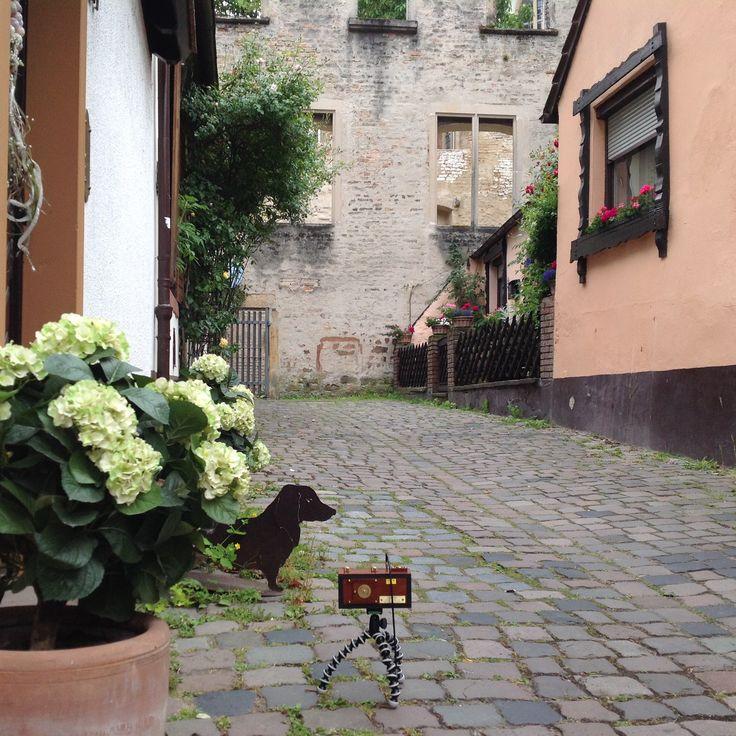 Zero image Deluxe. Pinhole 6x6 cm. Photo location; Speyer, Germany. Film used: Velvia 50 asa. Exposure time: 33 secondes
