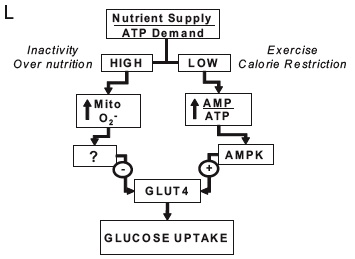 Hyperlipid - You need to get calories from somwhere, should it be from carbohydrate or fat?