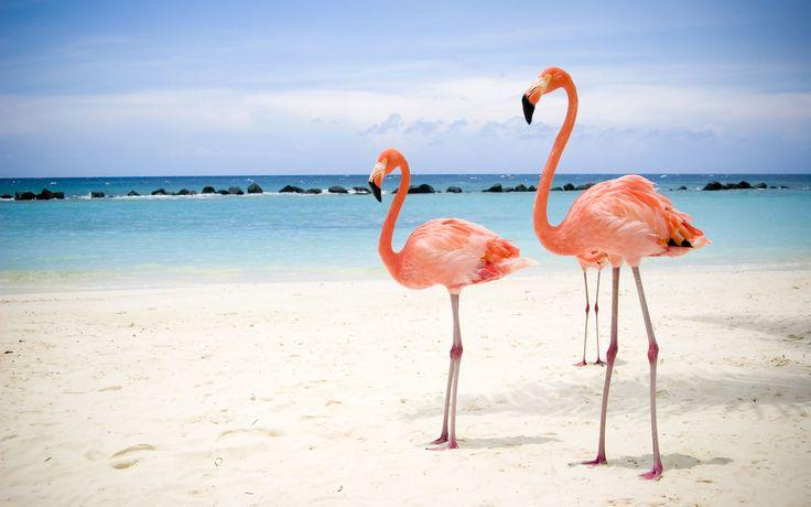 .: Beaches Waves, Pink Flamingos, Animal Kingdom, Palms Beaches, Flamingos Wallpapers, Beaches Wallpapers, Desktop Wallpapers, Beaches Pictures, The Beaches