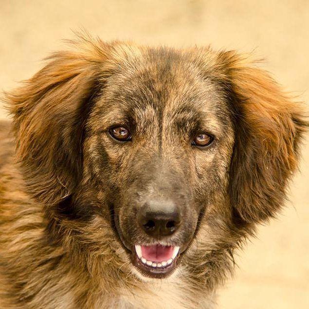 Inaugurata su #BauSocial la sezione #Adozioni in collaborazione con DacciUnaZampa Onlus. Lui è demetrio e cerca casa! Due anni taglia media. . . #dog #dogs #cane #rescue #adozione #adopton #pet #love #life #instadog #Bau #dogstagram #amazing #all_shots #igersmilano #milano #vsco #beautiful #amazing #dacciunazampa #demetrio #italia #photooftheday #cani