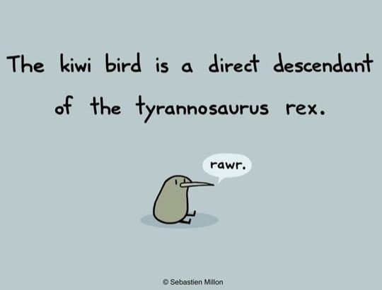 Haha! We always imagine dinosaurs as scary... Just imaging a scary dinosaur kiwi thing stomping around...