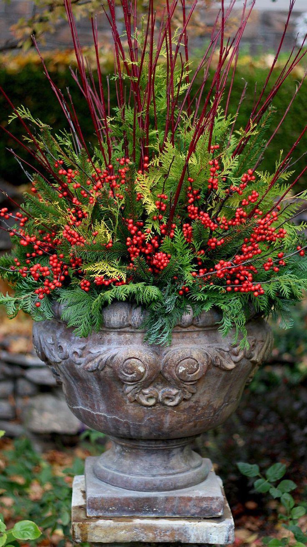 best out door plants u flowers images on pinterest nature