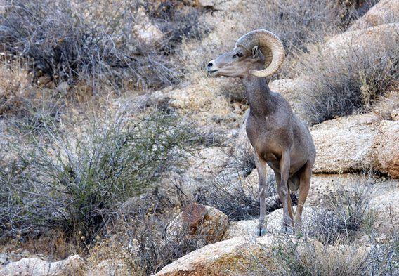 46 best Desert Biome images on Pinterest | Desert biome ...