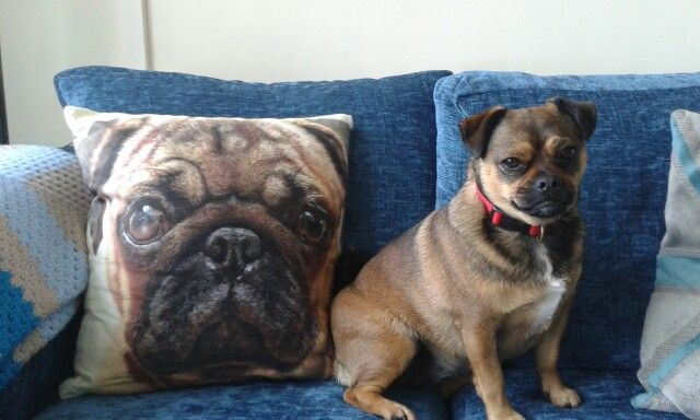 Mali's not impressed with the new cushion!