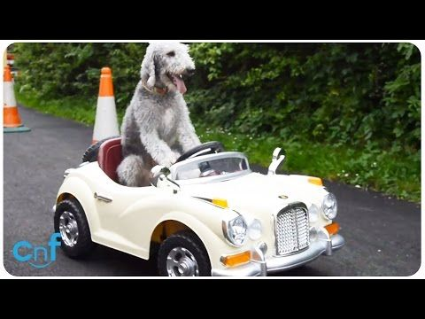 I Passed My Driver's Licence* Test! — Cute Overload