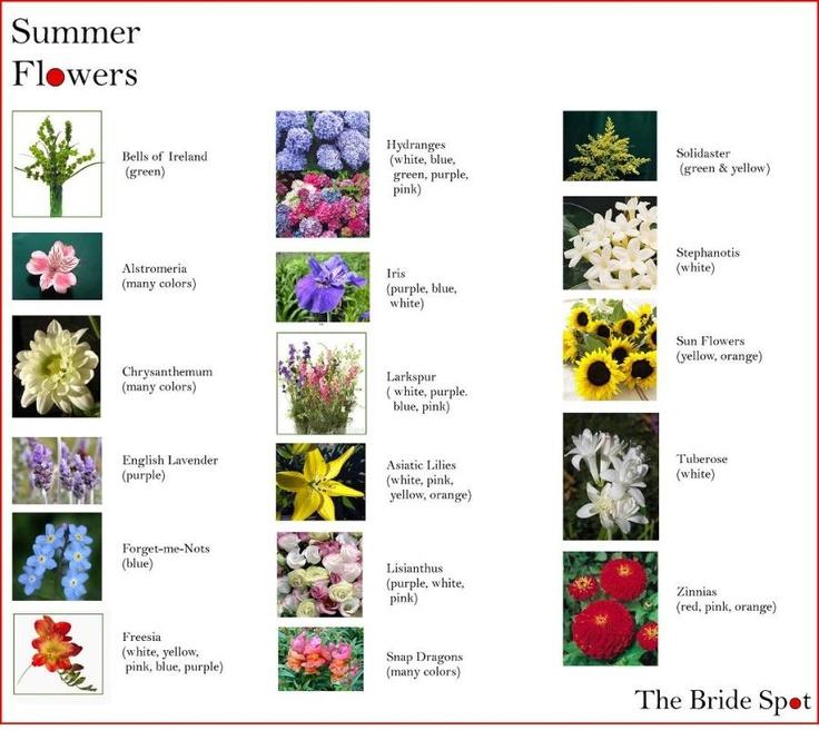 Summer Flower Guide Flowers Pinterest Flowers