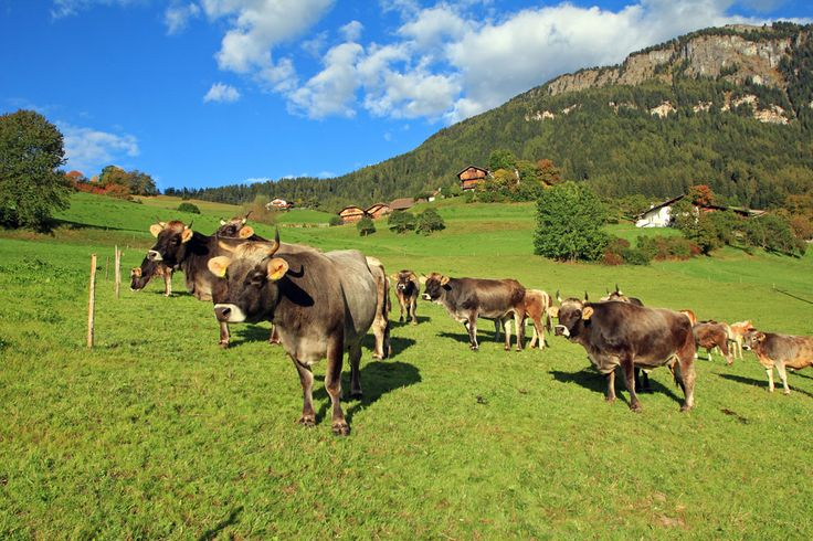Farm holiday in rural idyll