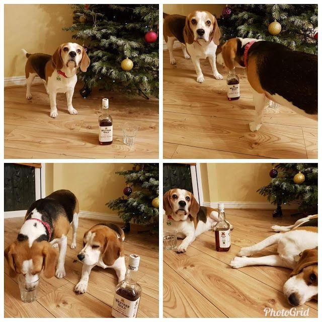 Charlie The Dog And Baby Youtube Dogs Beagle Dog Beagle