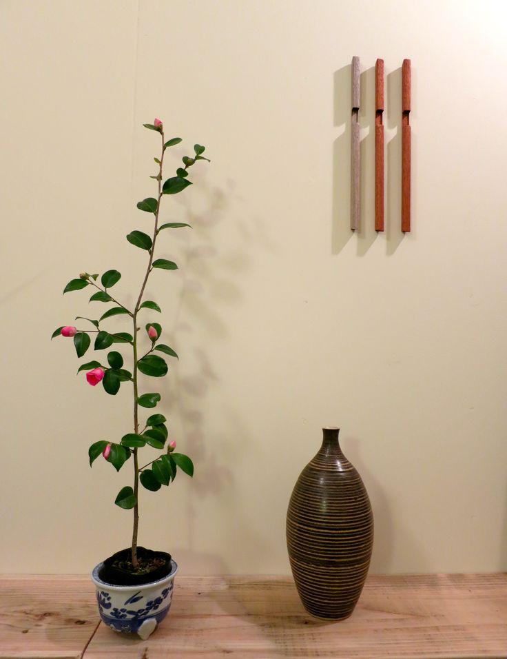 友人がプレゼントしてくれた雪椿が次々に咲いてきました