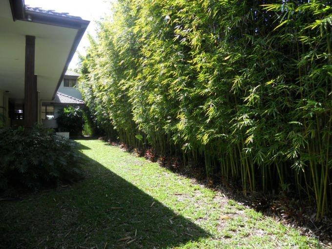 Bamboo Garden Foot Spa