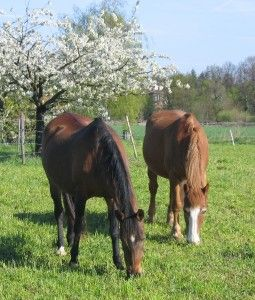 Excellent article on Pasture Management and the best types of grasses for horses.