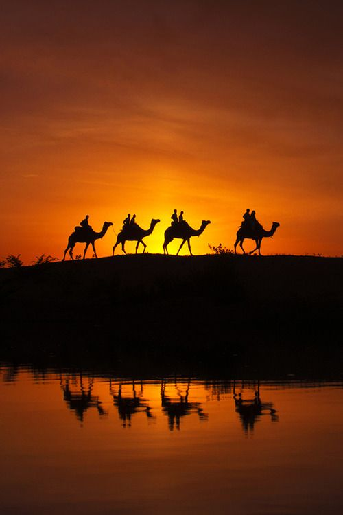 #desertsafariDubai #cameldesertsafari http://desertsafaridubairfk.com/