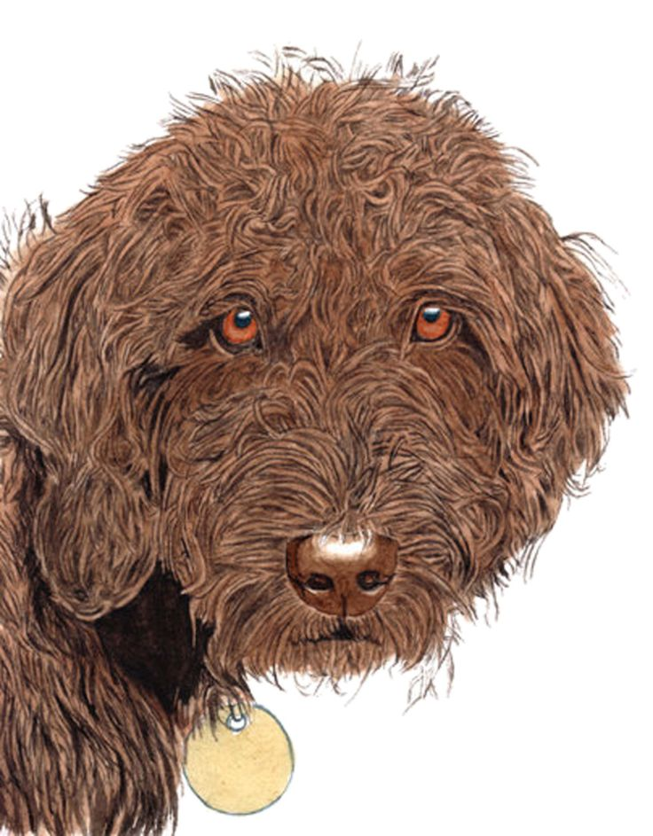 Chocolate Labradoodle with name by yvonnecarter on Etsy https://www.etsy.com/listing/160759414/chocolate-labradoodle-with-name