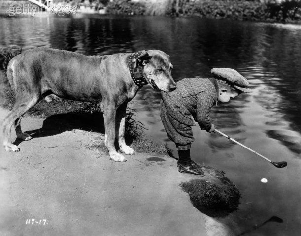 A dog holds onto a little boy by the tail of his golfing jacket as he tries to retrieve a ball in a river with his golf club.