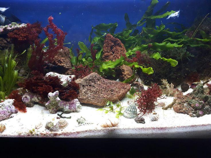 My marine planted tank/ display refugium  https://youtu.be/8Akcj1B3_io