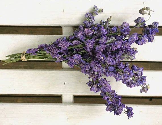 Small Petite Natural PURPLE/ BLUE LARKSPUR Dried Flower Bunch  Wedding flowers Cottage flowers  Shabby chic Prim flowers dried floral bunch