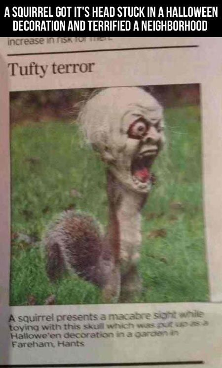 Squirrel gets head stuck in Halloween mask and scares the neighborhood. Haha,