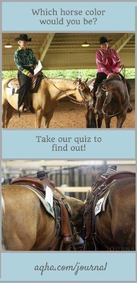 17 Best images about Horse Coat Color Genetics on ...