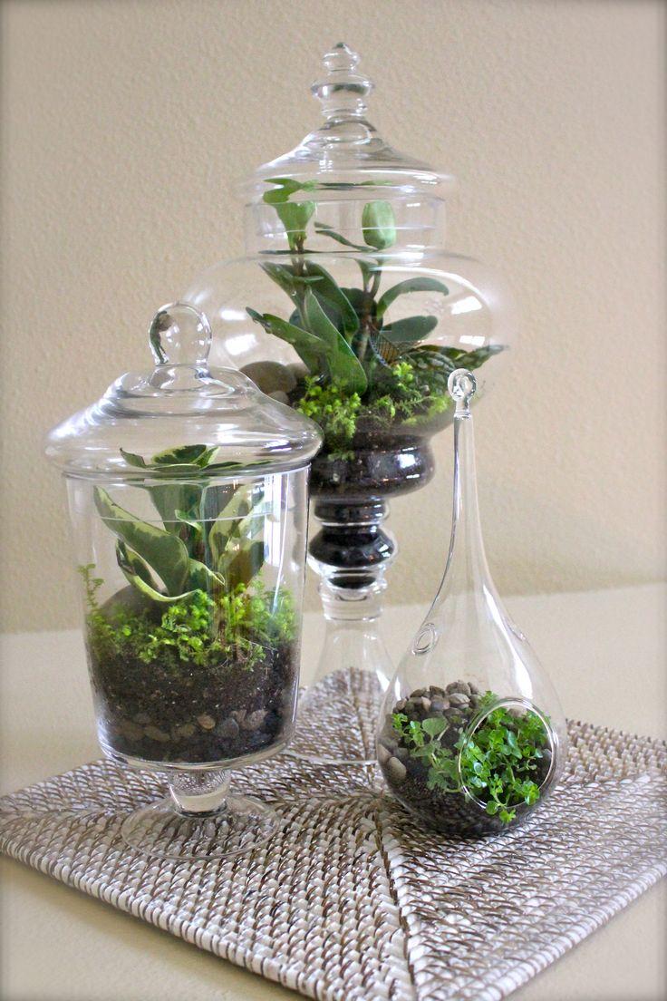 Blumen Dekoration aus lebenden Pflanzen als Mini-Terrarium