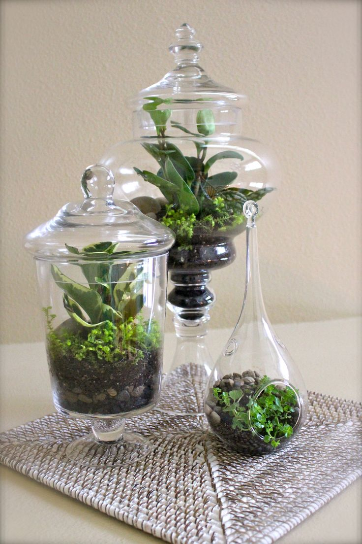 Apothecary jar terrariums