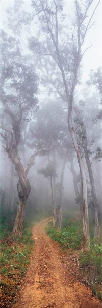 Forest Gateway, Victoria, Australia