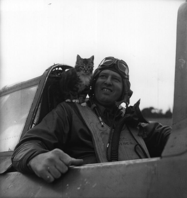 World War II. Besides all the brave men and women that served their country, there were quite a lot of (un)Enlisted Furballs, too! (Deets in the hovers: that kitteh above is sitting in the cockpit of an RAF pilot, 1944.)