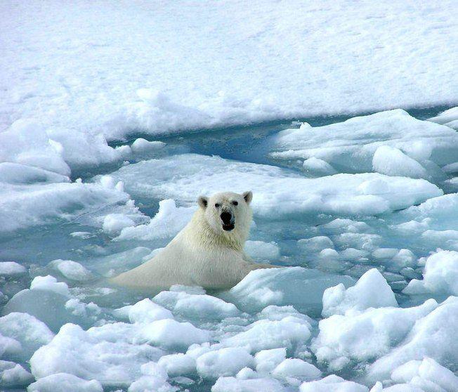 Küresel Isınma  Günümüzde yeni olarak ortaya çıkan güncel sorunlardan biridir. Özelikle bugünlerde sık duyduğumuz bir terim olan ısınma, daha çok kısa süreli  değil de  uzun yıllar  sonucu ortaya  çıkan  bir olaydır. Günümüzde  dünyayı  etkilediği gibi, gelecekte de daha büyük alansal  olarak etki  edecek olaylardan biridir. Sadece dünyanın bazı bölgeleri değil tamamını ve üzerinde yaşayan tüm canlıları etkileyecektir.  http://cografyabilimi.net/kuresel-isinma/