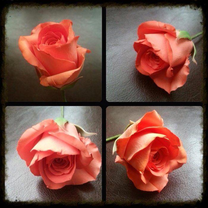 A sugar rose - by La lavande Cake Boutique @ CakesDecor.com - cake decorating website