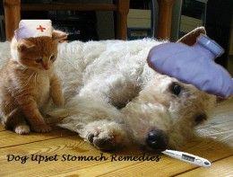Best 25 Dog Upset Stomach Ideas On Pinterest Upset