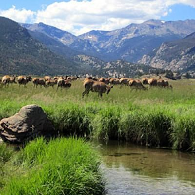 Moraine Park - Rocky Mountain National Park, Colorado