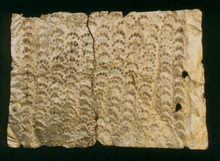 Grób wojownika z Jakuszowic (lata 30 V wieku)