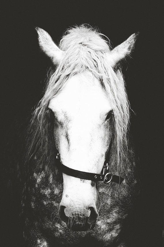 ART PRINT Home Decor Horse Black and White by pomelorice on Etsy, $32.00