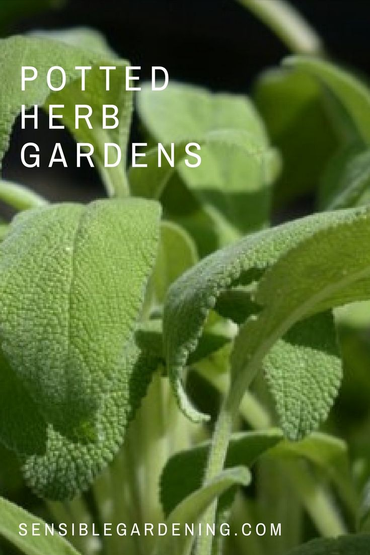 Potted herb gardens with Sensible Gardening. How to grow herbs in pots. Best herbs for growing in pots.