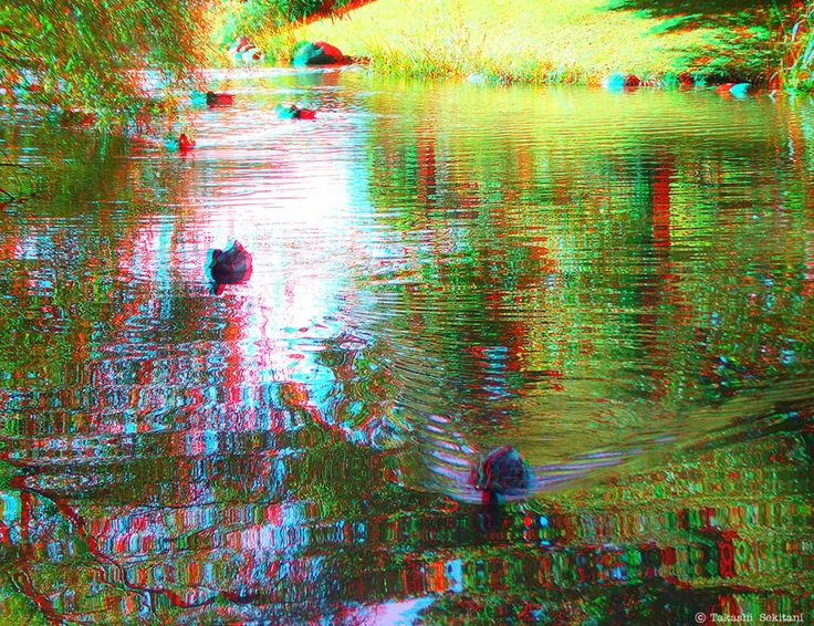 REFRECTION - Ducks (3D - anaglyph)
