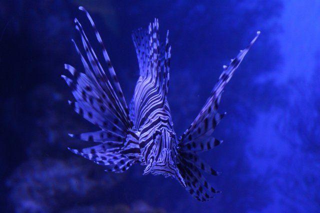 Two Oceans Aquarium Kapstadt
