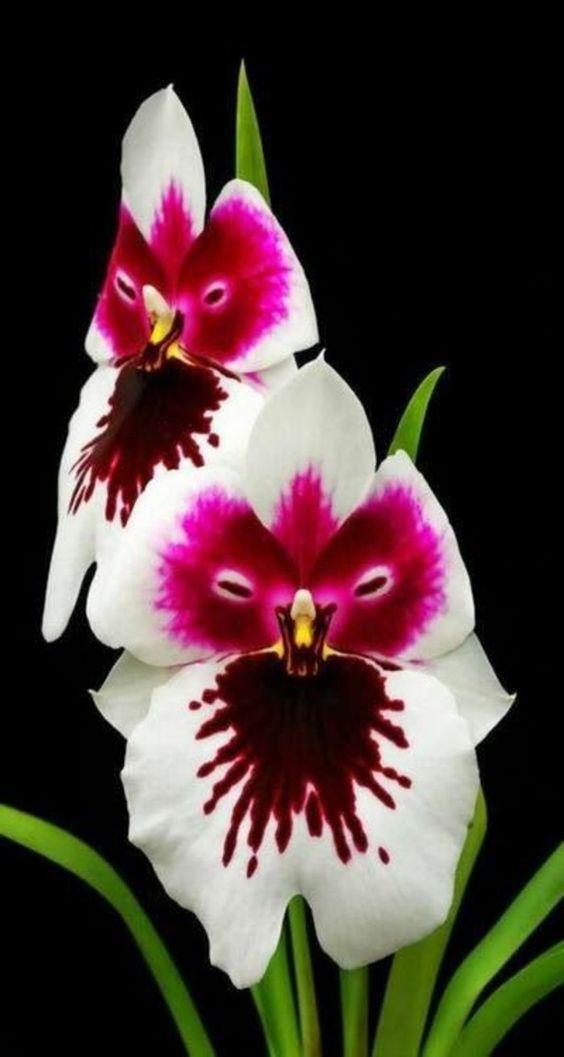 orchidées improbables; les merveilles de la nature