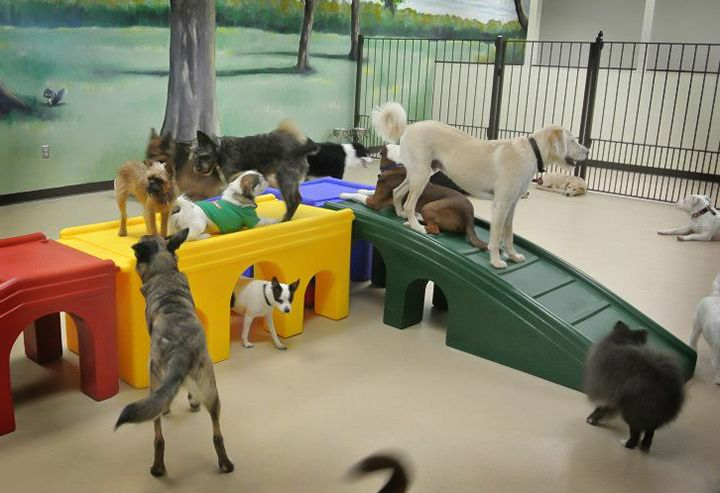 Best 25 Indoor Dog Area Ideas On Pinterest Doggy Room