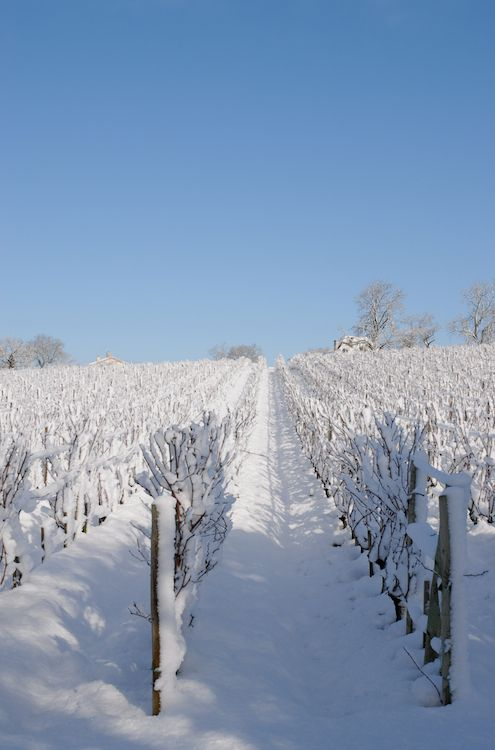 le vignobles de Fronsac sous la neige, Fronsac, Gironde, France