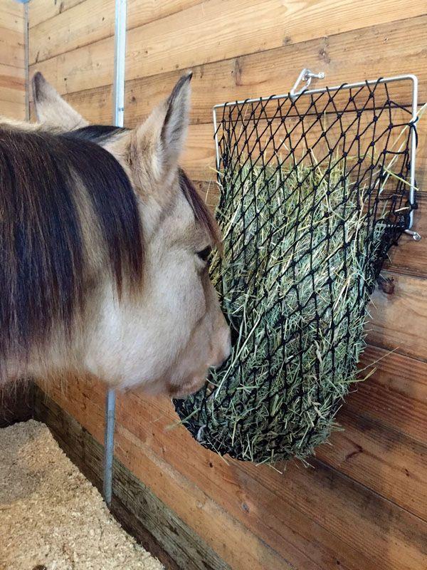 Hey! It Works! | Horse&Rider