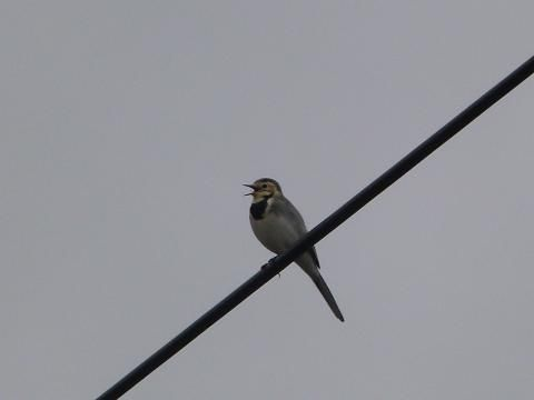 peterorchardnod: My 'High Five' from Holton Lee! The pied wagtail seemed happy enough despite the rain https://t.co/JvZl9y6VNy