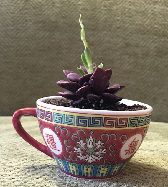 Succulent in Asian teacup small flower pot by AuntJensGarden
