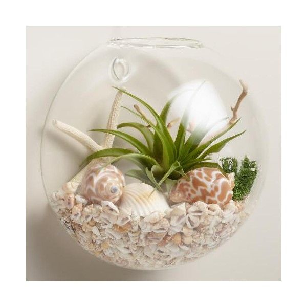 Cost Plus World Market Wall-Mounted Live Plant Glass Terrarium ($35) ❤ liked on Polyvore featuring home, home decor, floral decor, miniature terrarium, cost plus world market, glass terrarium, succulent terrarium and glass home decor