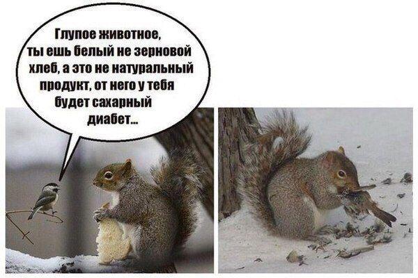 Любителям синиц....на заметку!: volkov_serge