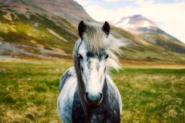 #wildhorses